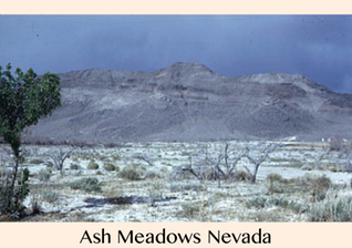 Pic 1. Ash Meadows Nevada, Your Radiation #44, Feb 13-20, 2016